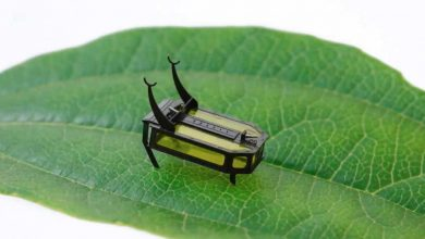 Photo of Mikro Robot: RoBeetle